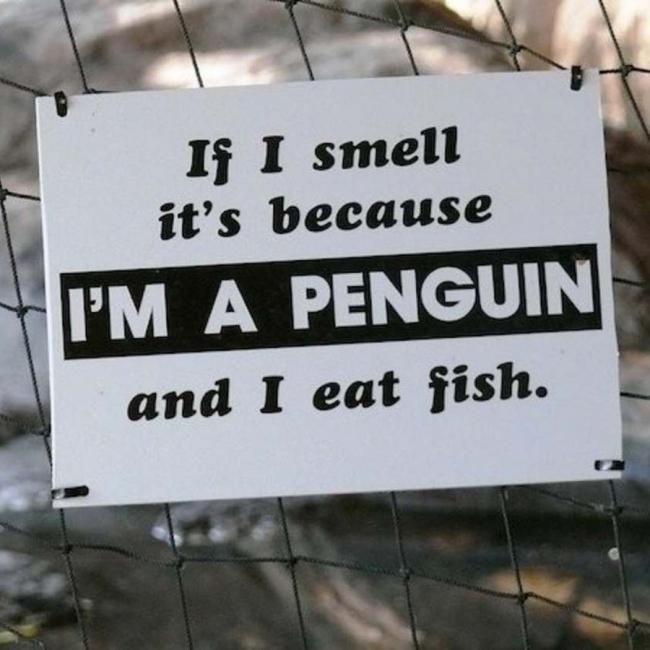 I Eat Fish